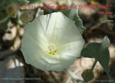 http://www.soullightcoach.com