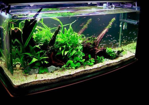 Simple and Effective Solutions for Aquarium Algae