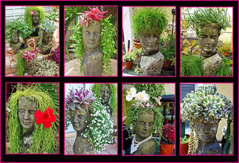 plantas macetas cabezas con peinado de plantas