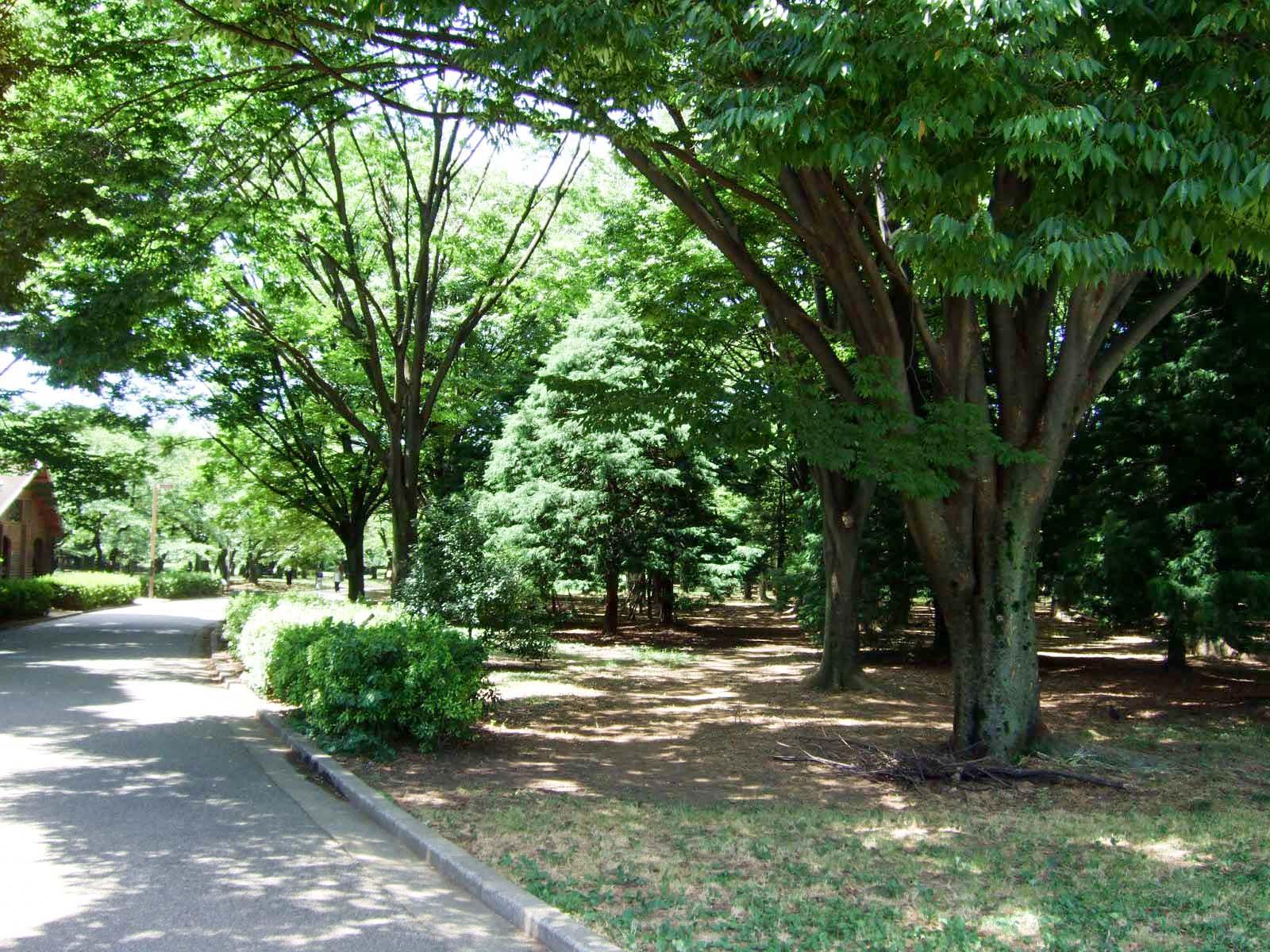 森林,代々木公園,盛夏,真夏〈著作権フリー無料画像〉Free Stock Photos