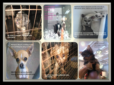"THE VICTIMS OF PUPPY MILLS - VIDEO PHOTO  "" PLEASE STOP PUPPY MILLS"""
