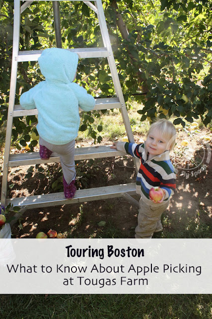 What to Know About Apple Picking at Tougas Farm