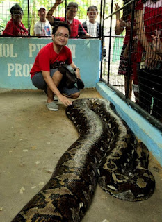 prony the huge python
