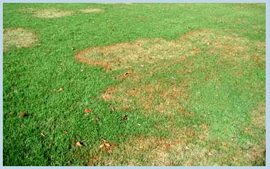 Brown Patch In Grass Home Remedy
