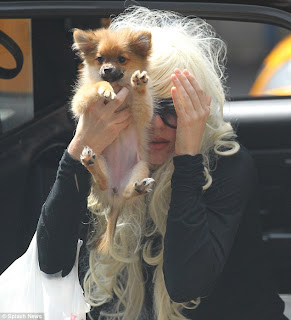 Amanda Bynes shields herself from the cameras with her new puppy
