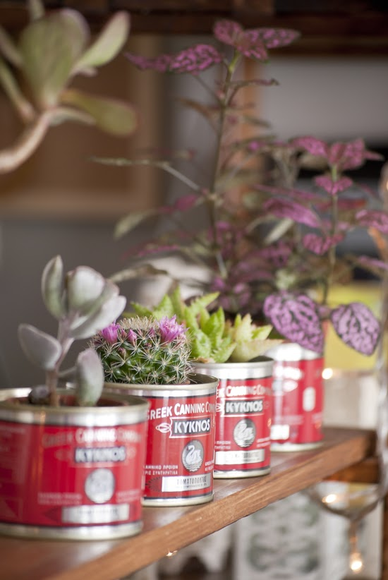 Tin can planters and my paradissi on a book  ©Eleni Psyllaki