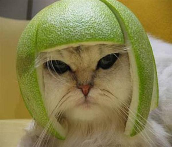 funny cats wearing fruit helmets 15 pics amazing creatures