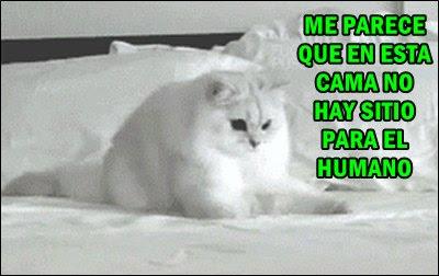 foto-meme-gato-evaluador-cama