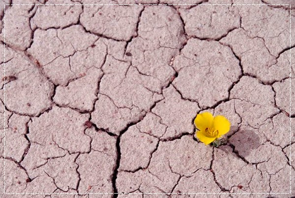 Flor terreno árido