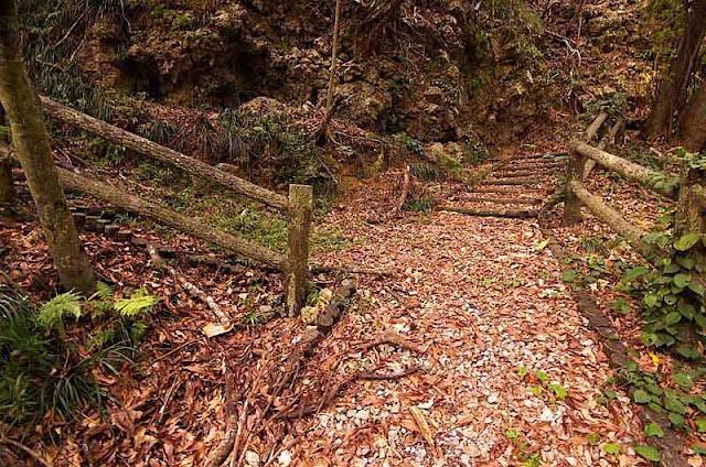 split in forest trail