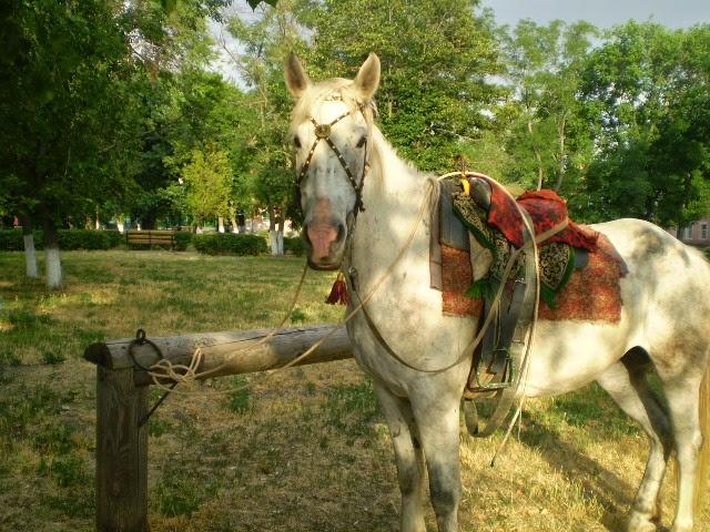 Старочеркасск-Конь