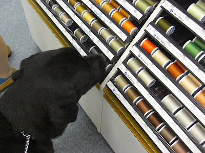 Picture of Al looking at different colors of thread