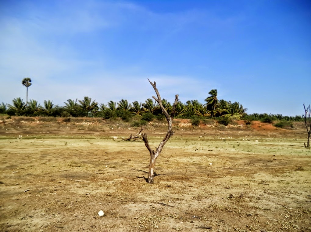 A Dry tree standing in Vellalore Dam