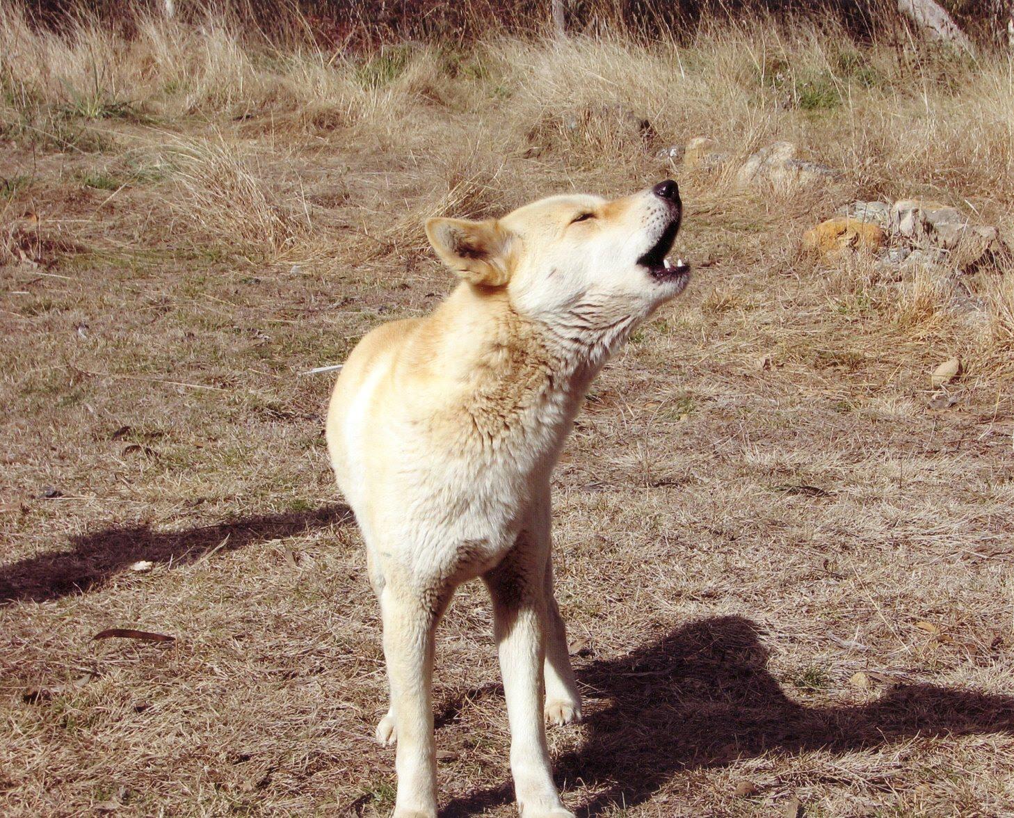 Как таня отнеслась к подарку дикая собака динго