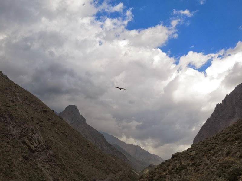 Ein Kondor fliegt das Tal hinab...