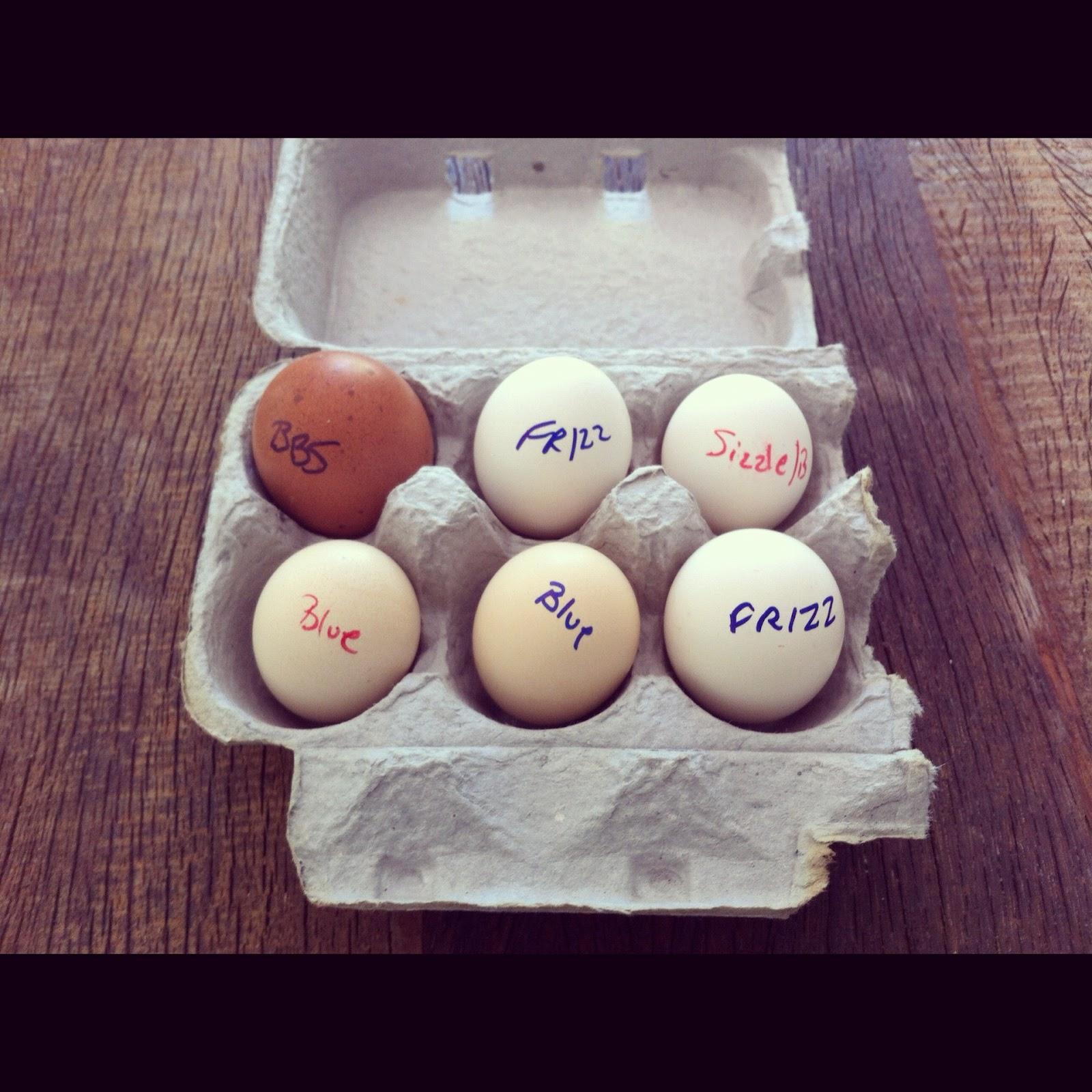 Silky Chicken Eggs