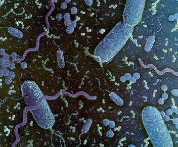 Bacteria E. Coli, H1N1,Sarampion