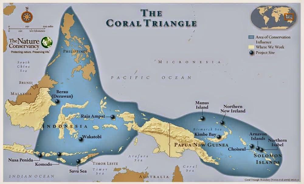 Coral Day di Pulau Bangka, Momentum Penyelamatan Terumbu Karang