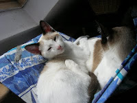 Sire Galahad et Mummy....