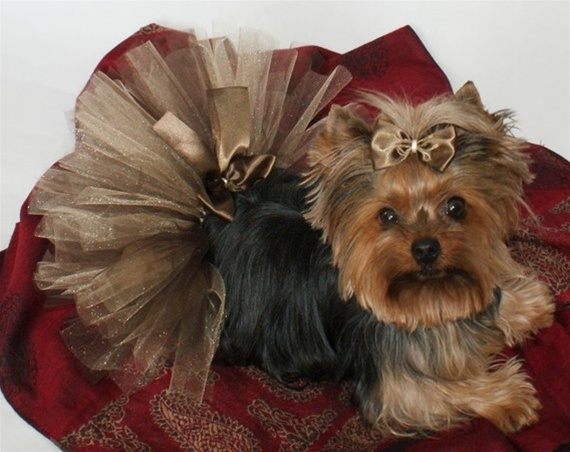 Dress your dog for Halloween with our beautiful Shimmering orange dog tutu