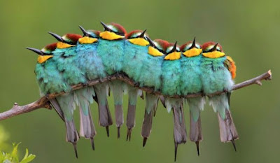 Hidden Caterpillars In Birds Illusion