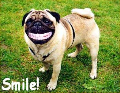 buenas fotos mal fondo eh imagenes de perros graciosos