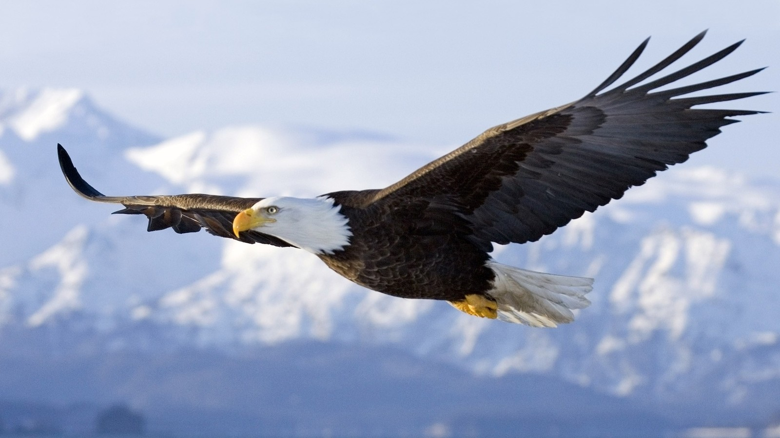 http://1.bp.blogspot.com/-KmYLqzWKe4w/UKAkgmiq37I/AAAAAAAAGDM/-FsIxJwqGNM/s1600/Floating-Eagle-Huge-Wings-HD-Wallpaper.jpg