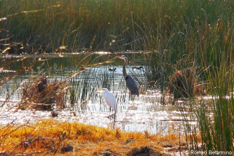 East Wetlands Yuma Arizona