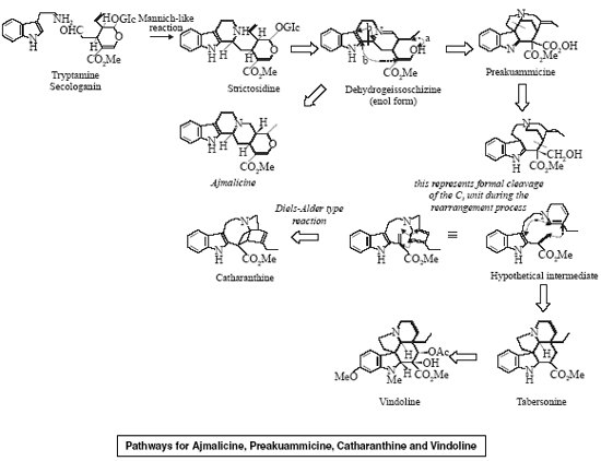 Pathways for Ajmalicine, Preakuammicine, Catharanthine and Vindoline