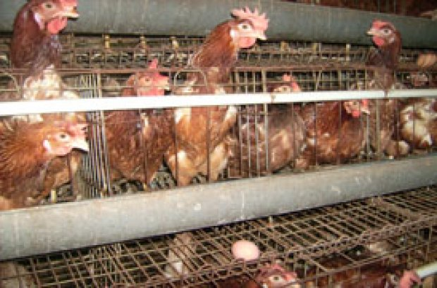 perusahaan pakan ternak terbesar di indonesia