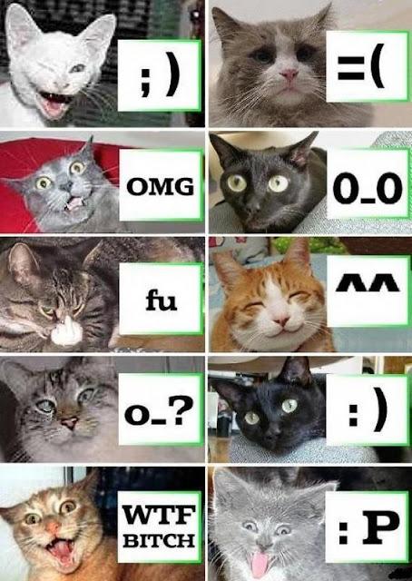 Funny Cat pics,Funny Cat background,pics,Funny Cat wallpaper,funny Funny Cat picture, funny  funny pics, funny pictures