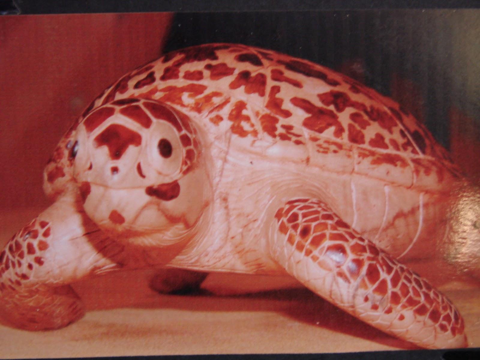 tortue sculpté bois