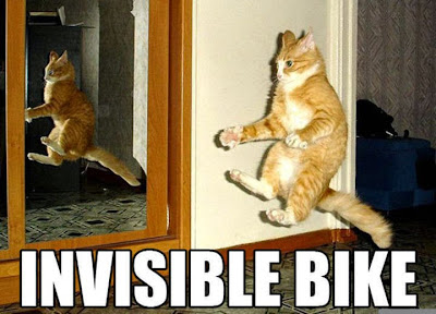 Funny cat photo