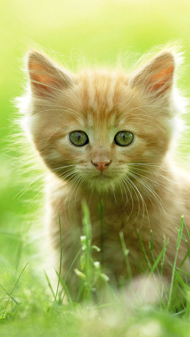 free download iphone 5 cat wallpapers 640x1136 1136x640