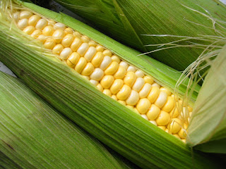 corn for fat reducing