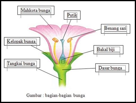 penampang bunga