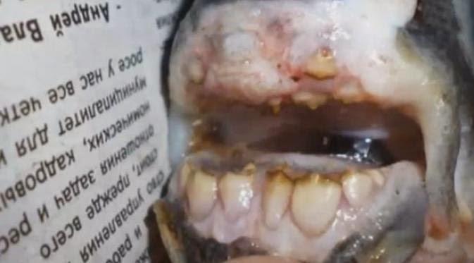 Ikan Misterius, Jenis Piranha Bergigi Manusia
