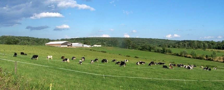 Dead End Farm