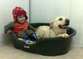 המקום של הכלב - המרכז הכלבני עמוס שיבולי