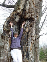 Cecelia Kane becoming an ancient maple