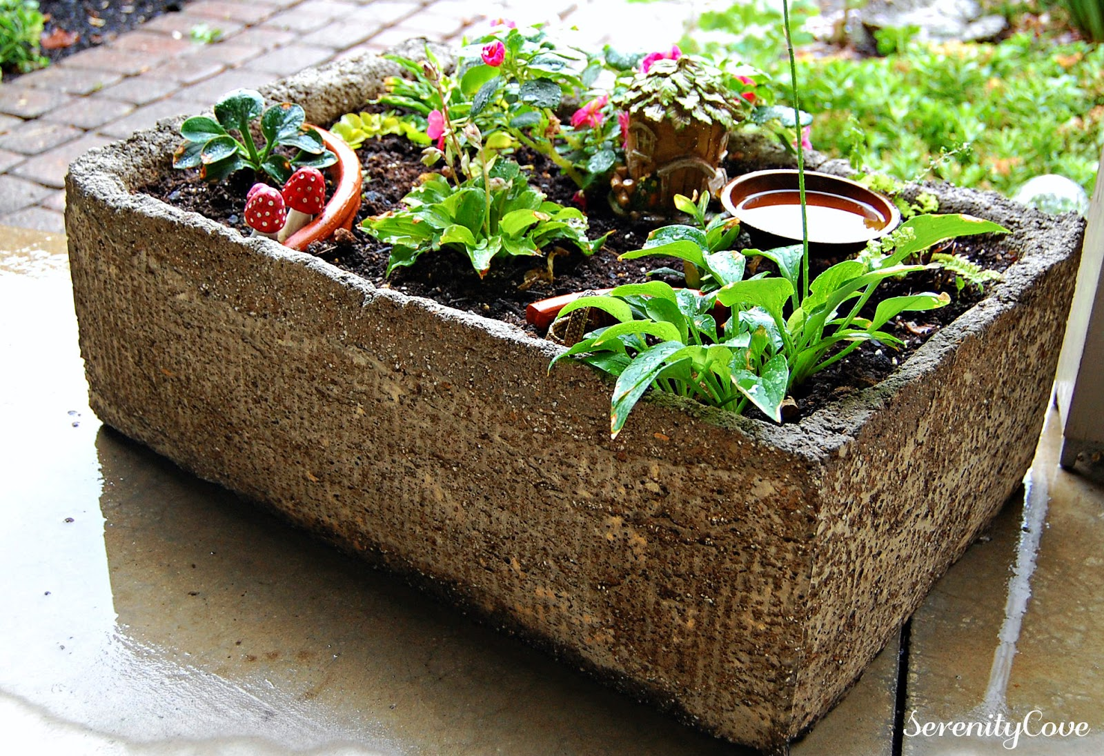 Mini Concrete Planters : Serenity cove a hypertufa planter for mini hostas