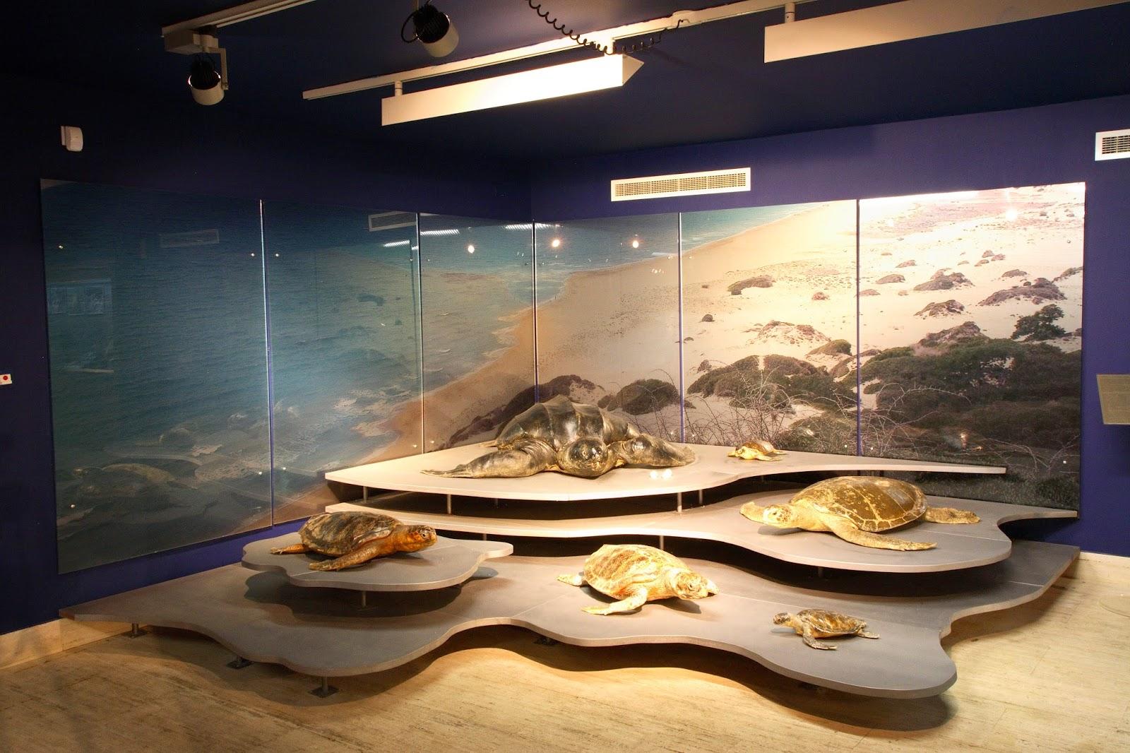 Марскі Музей і Марскі парк Кіпра