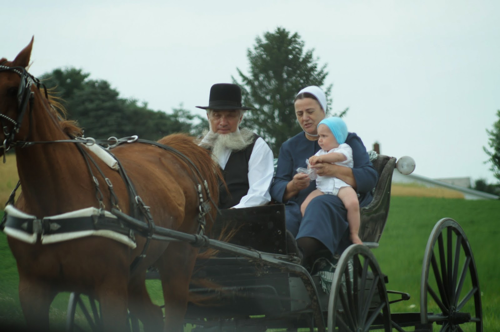 Things with wings ohio amish country for Amish country things to do