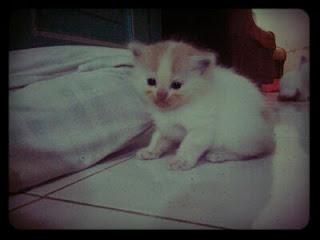 My Cute Gratel
