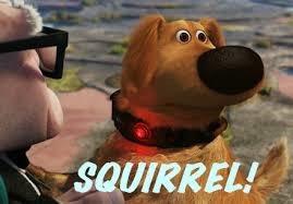 The Squirrel Club