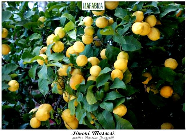 Limone Massese, Arancia Massese (e un po' di Spino Fiorito)