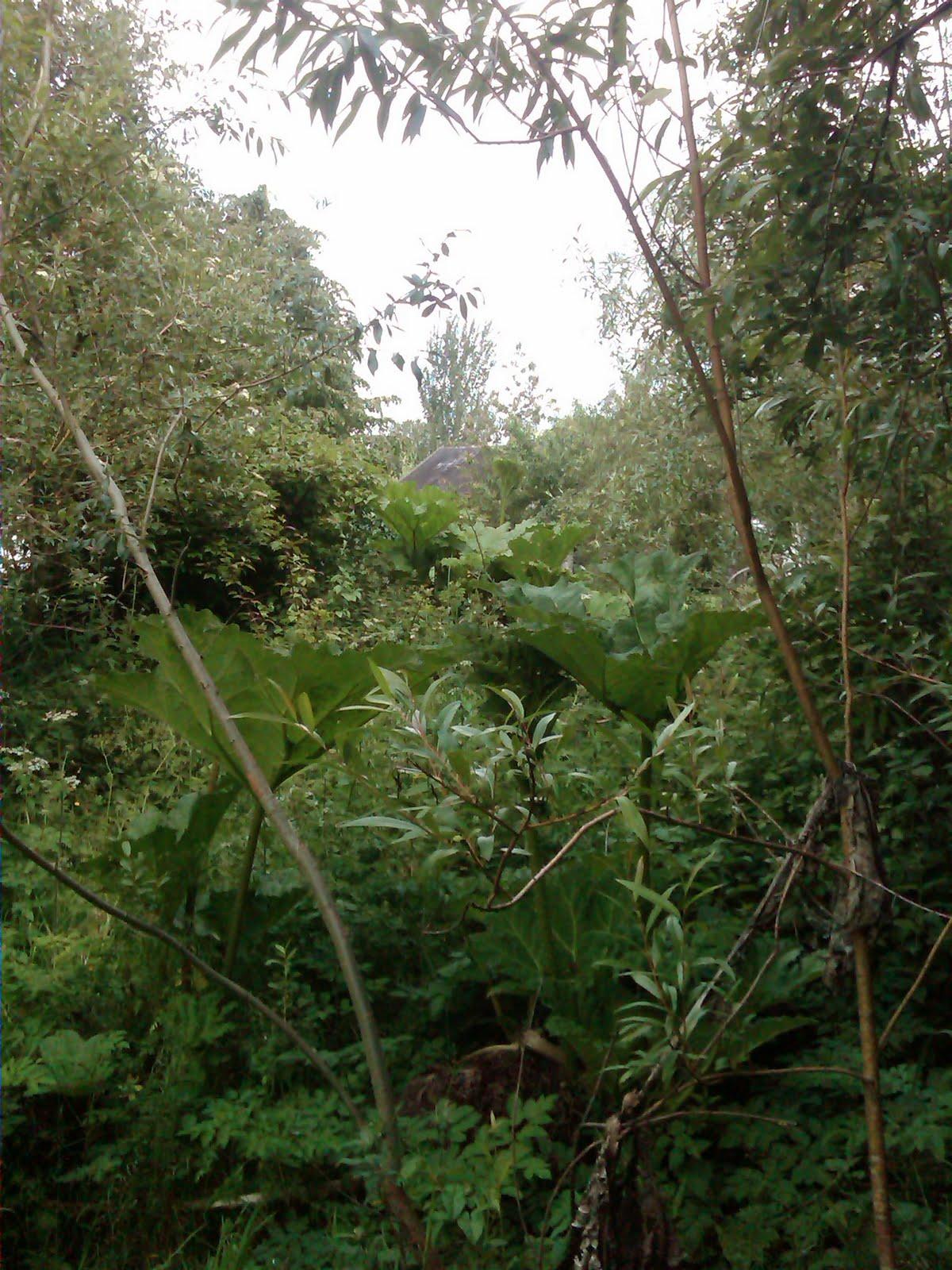 this hidden boardwalk garden for days, hard to believe its Ireland