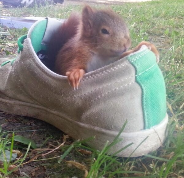 Funny animals of the week - 28 March 2014 (40 pics), squirrel sits inside shoe