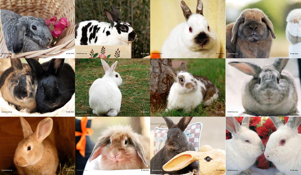 Puluhan Fakta Unik Tentang Kelinci Anda