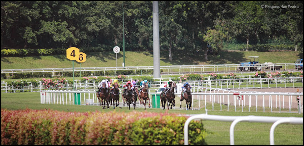 குதிரை பந்தயம் -Horse Race@Singapore _My_clicks-1 Horse+race_priyamudanPrabu+(2)